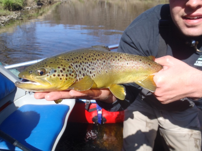 Clarion River Brown