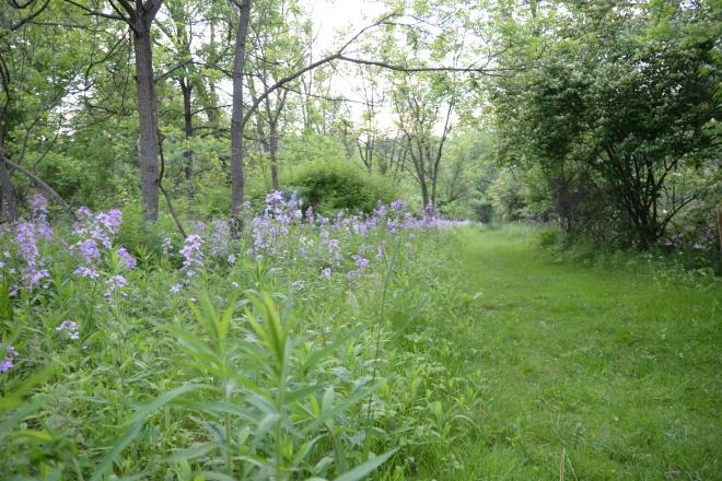 Spring Creek-3